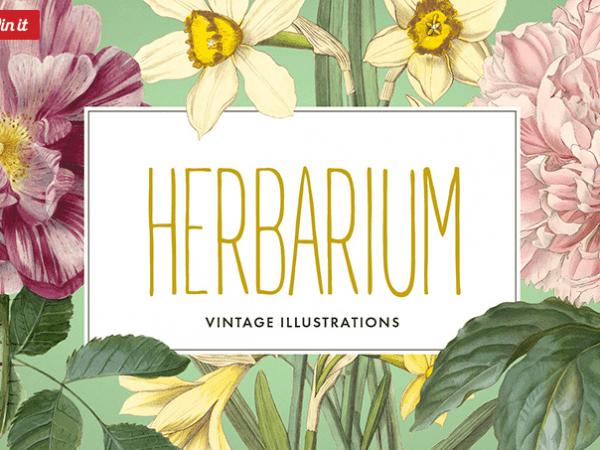 Collection Of 12 Vintage Flower Illustration