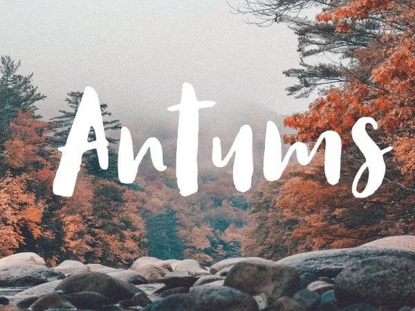 Antums Brush Script Typeface