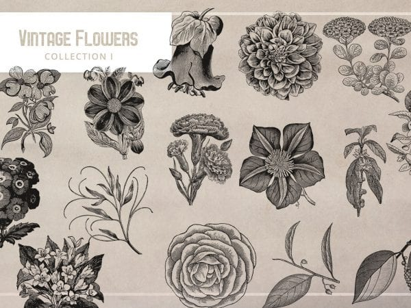 Collection Of Authentic Vintage Flower Illustration